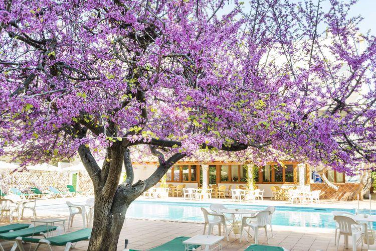 Hotel Gaya Paguera Club Blaues Meer Reisen